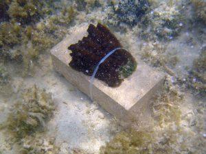db_sponges4